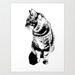 Coriander Art Print