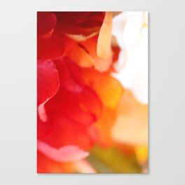 Colorful Silk Canvas Print