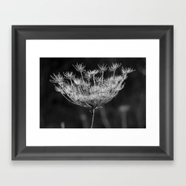 Withered pointed hogweed Framed Art Print