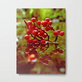 Madrone berries Metal Print