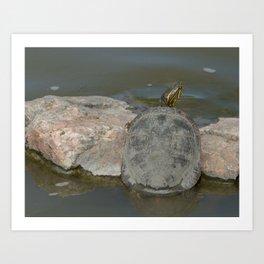 Western Painted Turtle Art Print