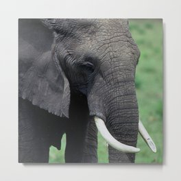 Epic, Awesome Elephant Close-Up Art Photo Metal Print