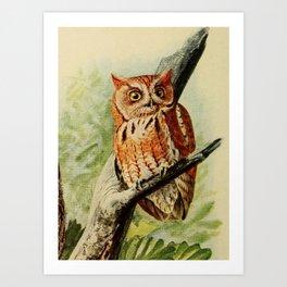 Vintage Illustration of an Owl (1912) Art Print
