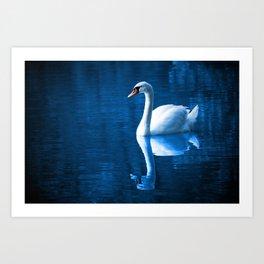 Pretty white swan floating on a blue lake Art Print