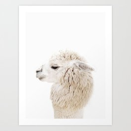 Baby Alpaca Portrait with Textured Background Art Print