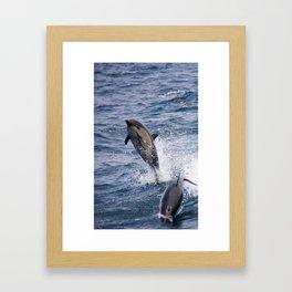 Playful Common Dolphins Framed Art Print