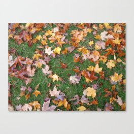 Fallen Foliage Canvas Print
