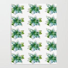 Echeveria Succulent Poster