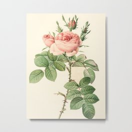 Rosa bifera Officinalis Metal Print