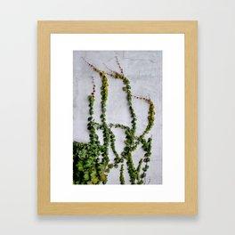 Upward Climbing (green vine on grey wall) Framed Art Print