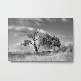 Windy sunset. Wonderful mountain almond Metal Print