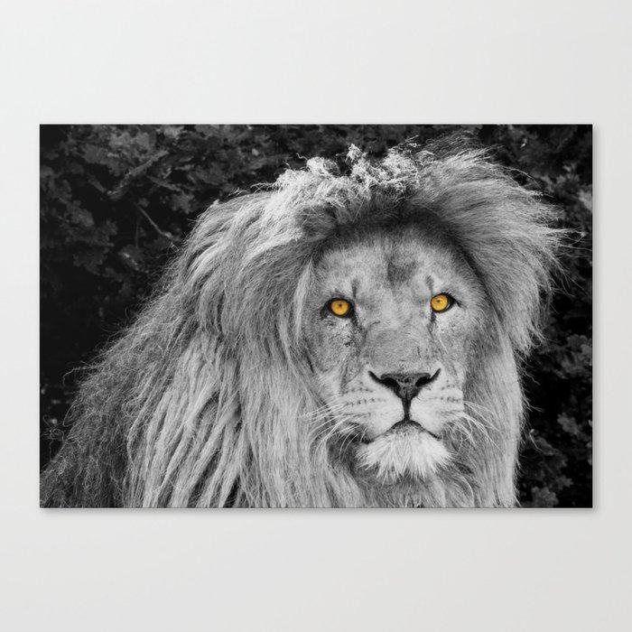 LION BEAUTY Canvas Print