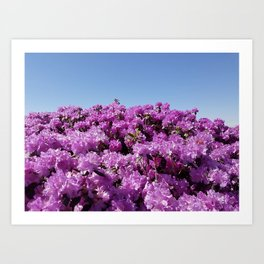 "View of ""Mount Rhodendron"" on a clear day Art Print"