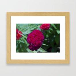 Velvet  Framed Art Print
