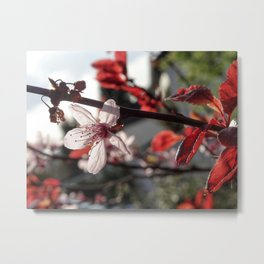 Flowering Plum Metal Print