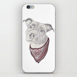pitbull//dog iPhone Skin