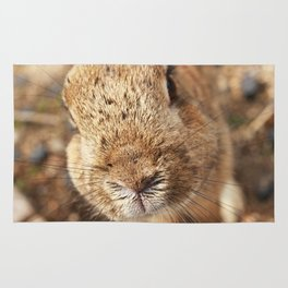 Rabbit Whiskers Rug