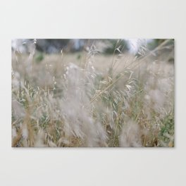 Tall wild grass growing in a meadow Canvas Print