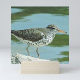 Spotted Sandpiper Mini Art Print