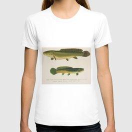 Illustrated New York Game Fish, Dogfish, Mud-fish, Bow-Fish Identification Chart T-shirt