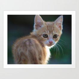 Gatto Rosso - Red Cat Art Print