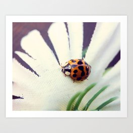 Ladybug On Flower Art Print
