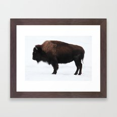 Bison Framed Art Print