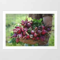 Dirty Radishes  Art Print