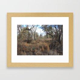 Sunraysia Bushland Framed Art Print