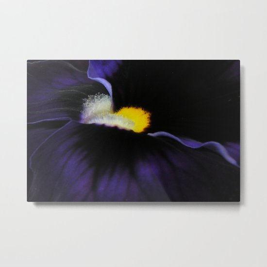 Deep Purple Viola Landscape Metal Print
