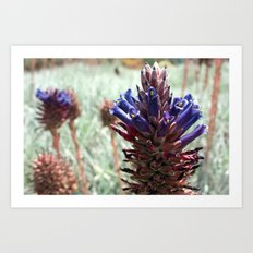 Purple  Flower  Spikes Art Print