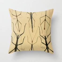 Naturalist Stick Insects Throw Pillow