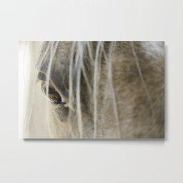 Stallions know Metal Print