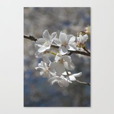 Ivory No. 04 Canvas Print