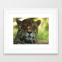 jaguar Framed Art Prints featuring Jaguar by Sean Foreman