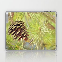 Pine Cone in the Sun Laptop & iPad Skin