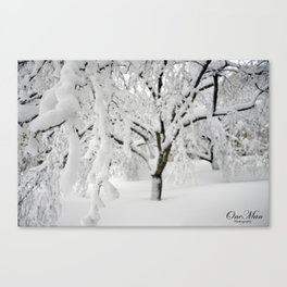 Weeping Ice Tree Canvas Print