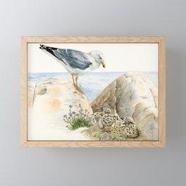 Seagull  - nesting bird on the Ligurian coast Framed Mini Art Print