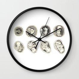 Foetal development Wall Clock