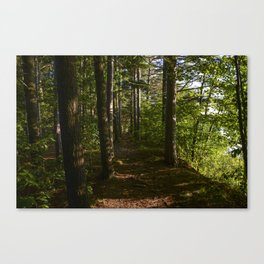 Through the Woodwork Canvas Print