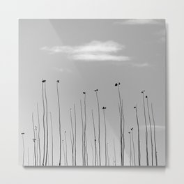 Young Poplars. Looking for the sun... I I Metal Print