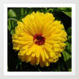 Holligold Blossoming Yellow Pot Marigold Flower  Art Print