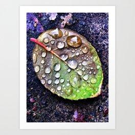 leaf droplets Art Print