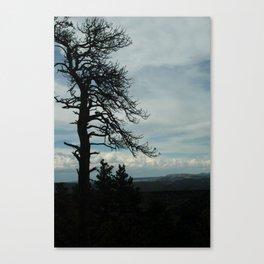 Tree Silhouette Canvas Print
