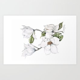 Magnoliart by Rashael Jones Art Print