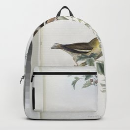 164 Coccothraustes vulgaris. Hawfinch Backpack