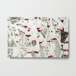Red berries and snowy tree Metal Print