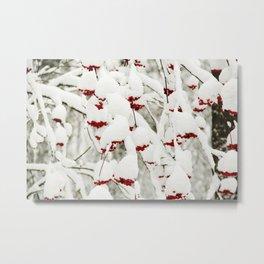 Red berries and snowy tree Metal Print