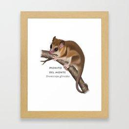 Opossum Framed Art Print