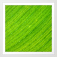 banana leaf Art Prints featuring banana leaf by blackpool